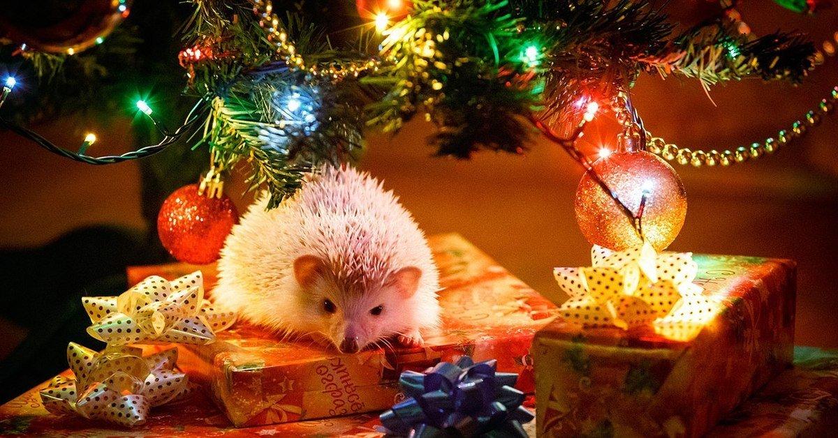 картинка ежика под елкой славится сладкими