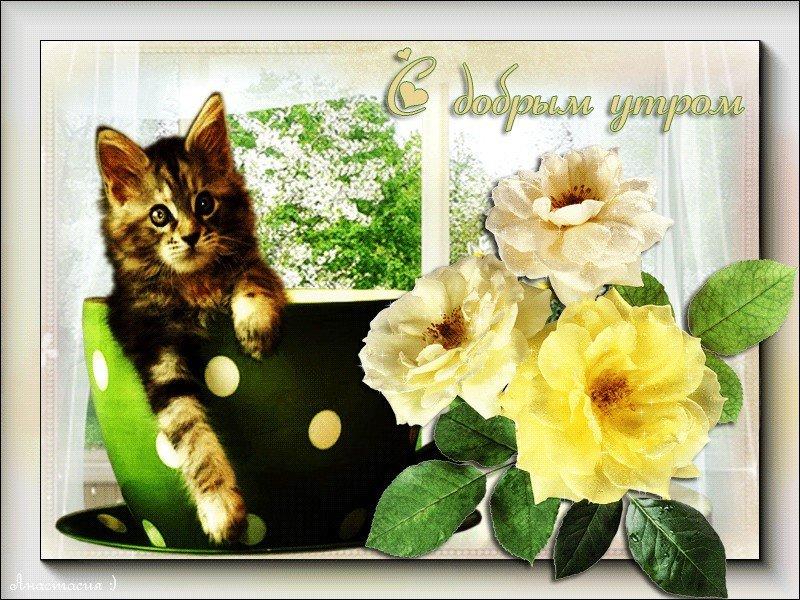 Иллюстрации котиков анимация с добрым утром, подарки февраля