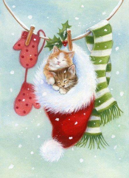 Котята спят в новогодней шапке