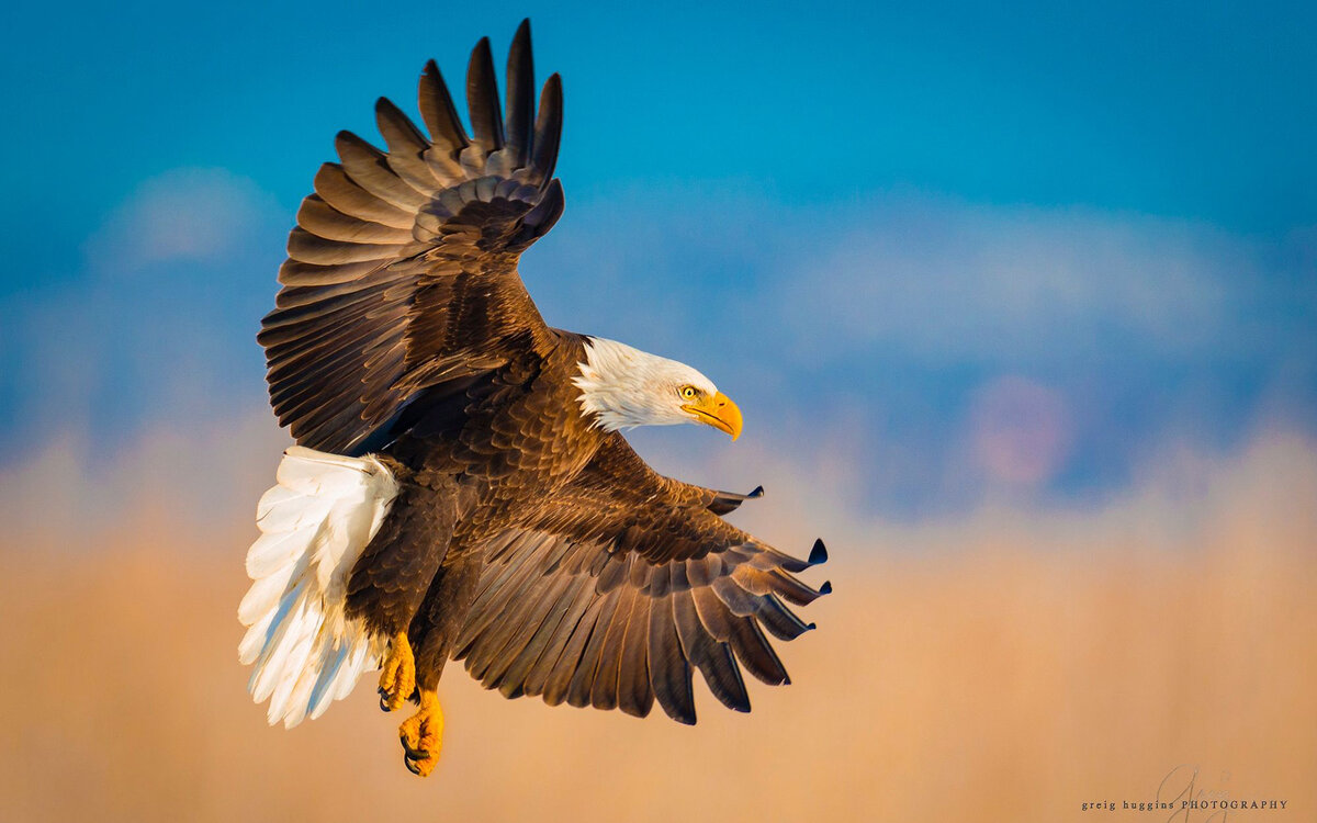 Год парящего орла смешные картинки, поздравление