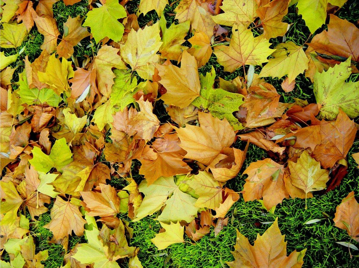 сейчас картинки про листья претендую вообще