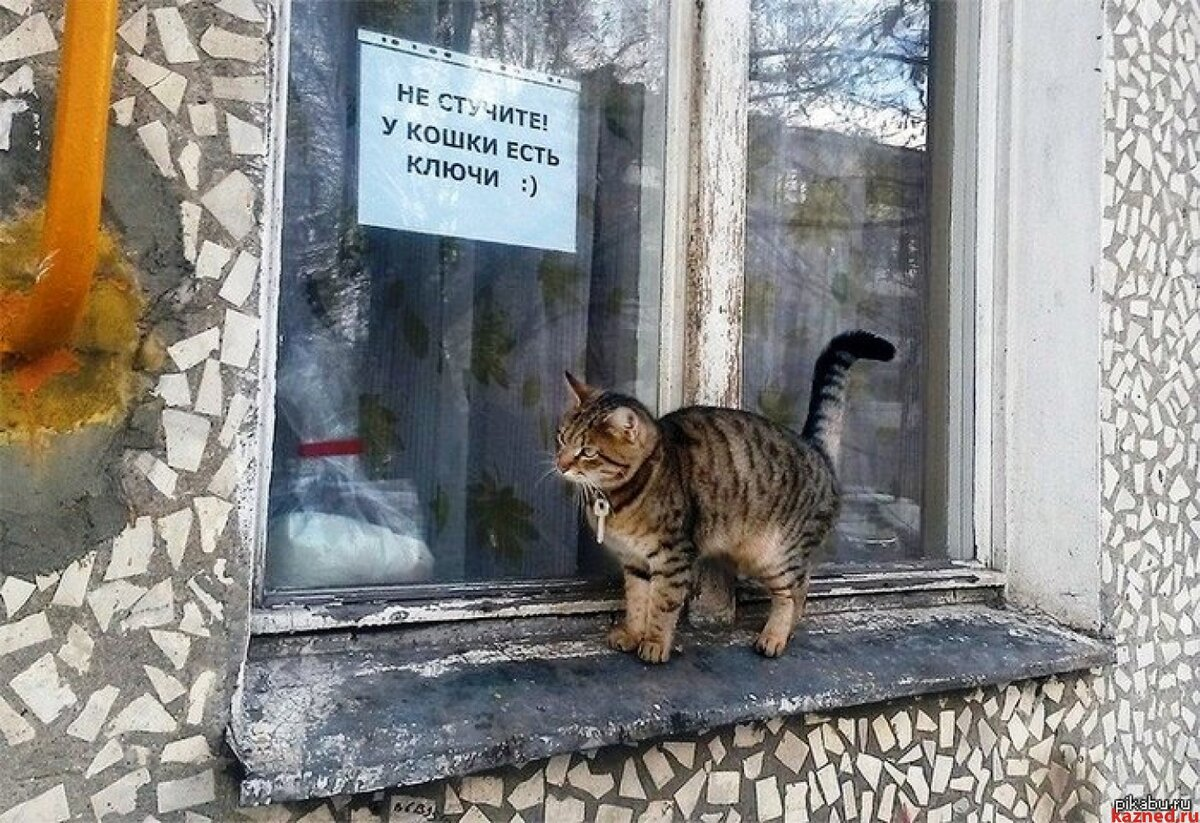 Картинка прикол про кошку на крыльце, словами дай
