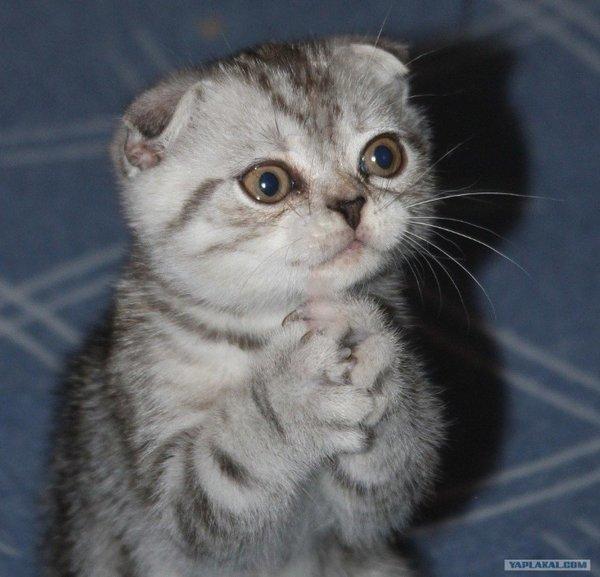 Просьба к родителям. Картинка не подходит))) Но уж очень котёнок славненький. Понравился. Вон как просит. | Сложилось само | Яндекс Дзен