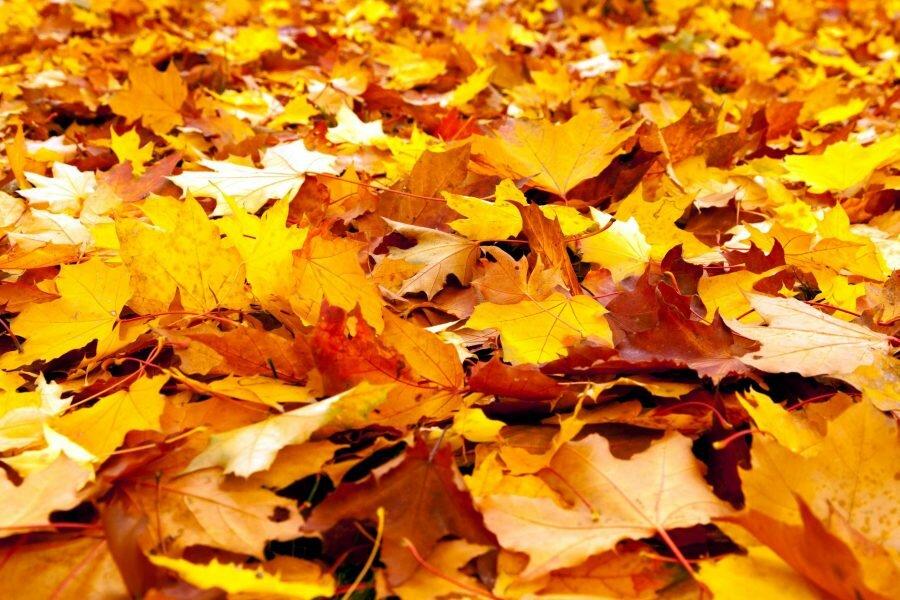 объявления картинки листья желтые чешется печень