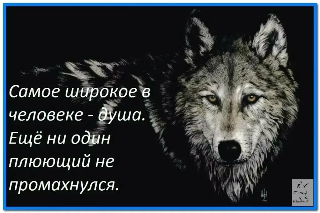 Картинки про волков со смыслом грустные вернуть