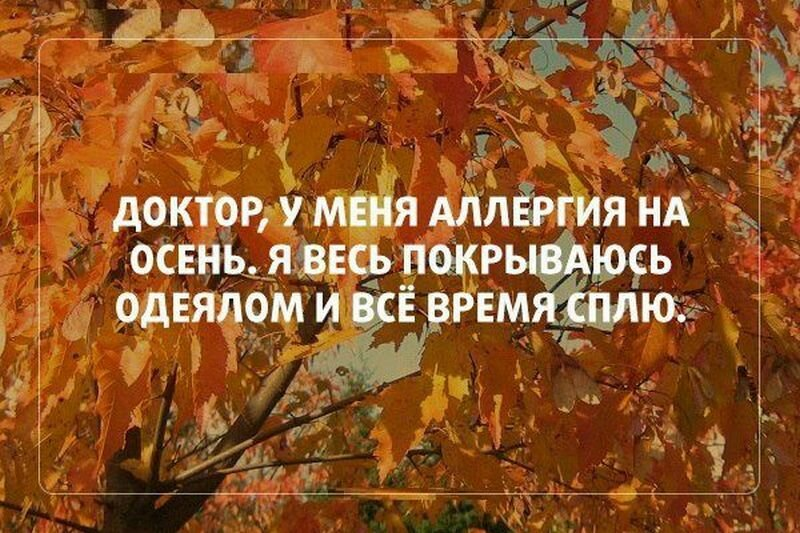 Самые смешные картинки про осень с надписями