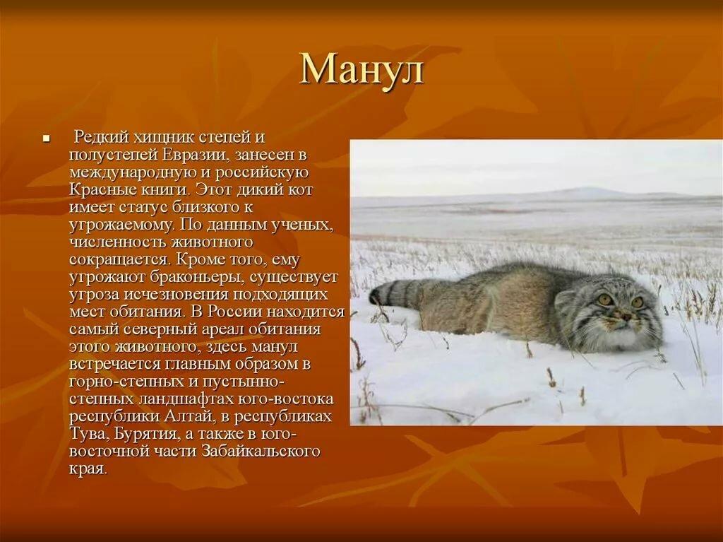 Картинки животных из красной книги с описанием, для