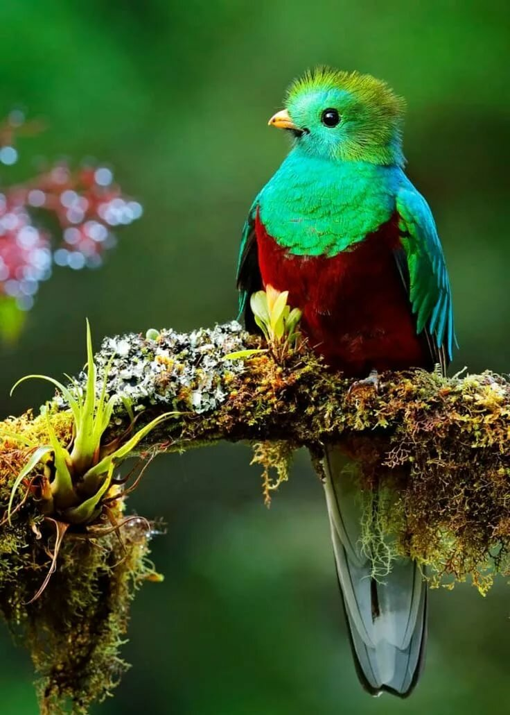 Птицы на природе красивые варианты