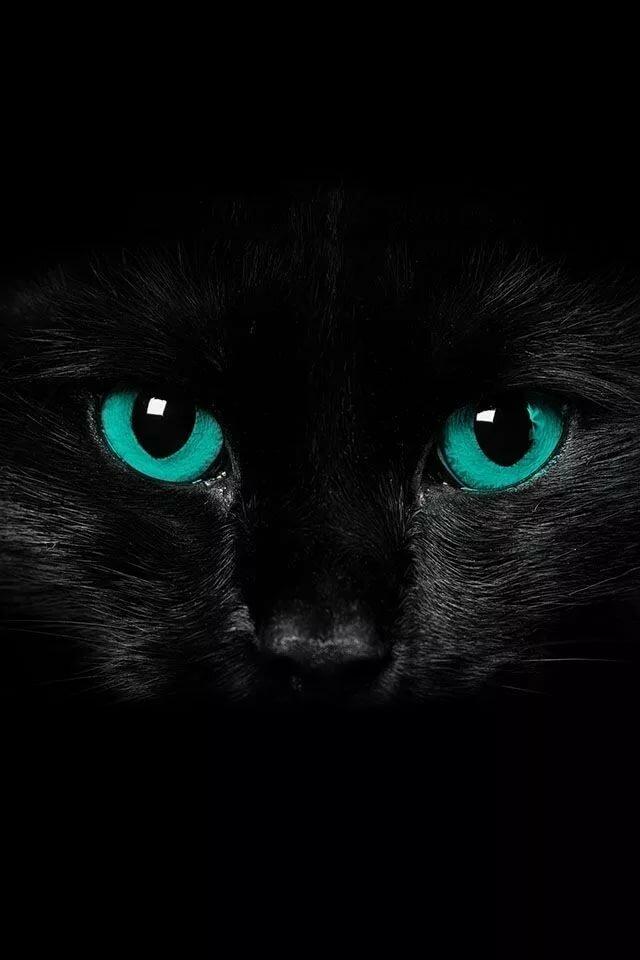 картинки для телефона черный кот