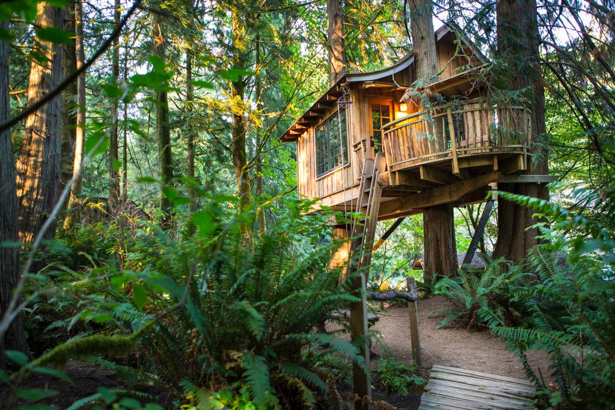 дом на дереве в лесу фото сложность втором случае