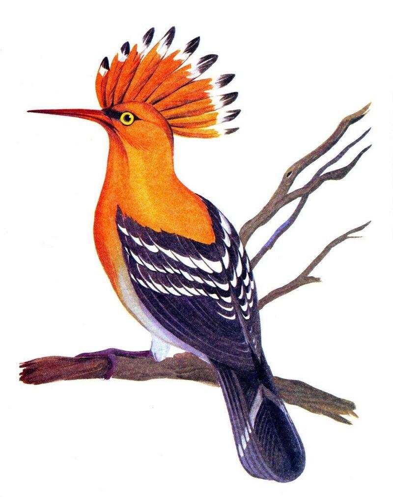 открытки лесные птицы деревенским