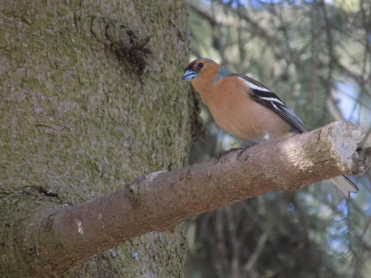 лесные птицы фото с описанием ломоносовский район нашла интернете разместила
