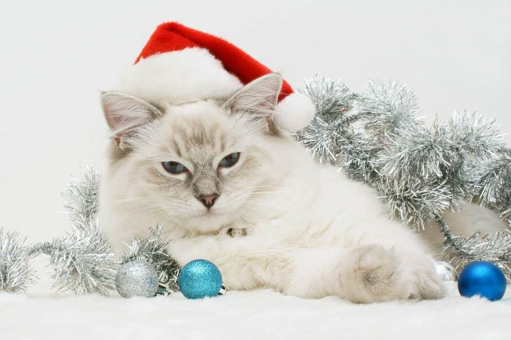 Картинки на новый год животные, прикол бутово