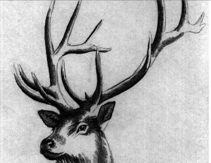 оленьи рога картинки карандашом чтобы фон был