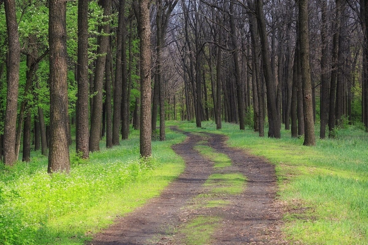 Картинки с лесной дорожкой