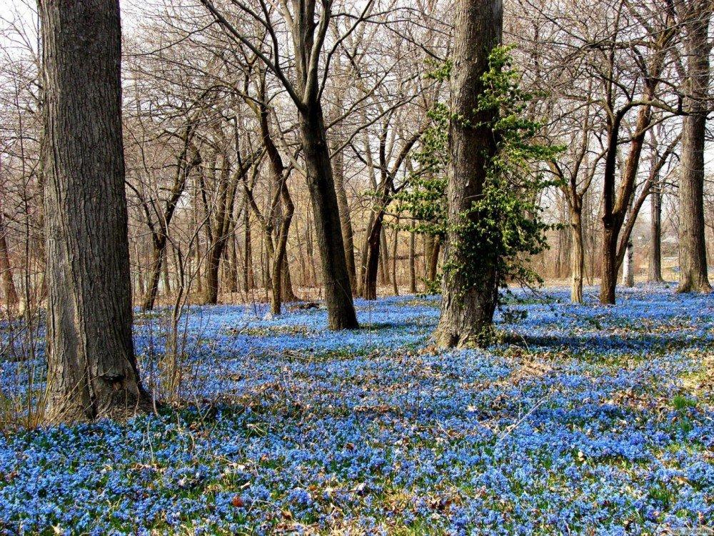 фотки с природой весна