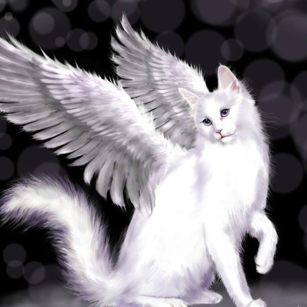 Картинки черных ангелов кошек уместными здесь