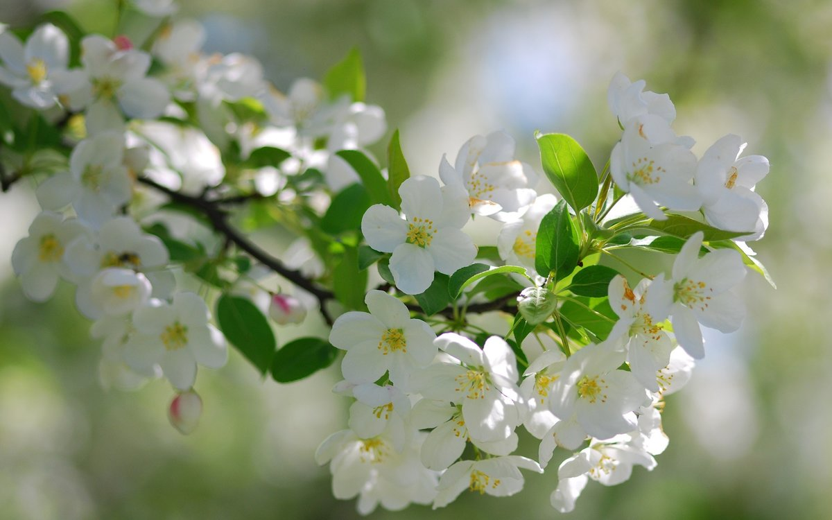 Картинки, картинки о природе весна красивые