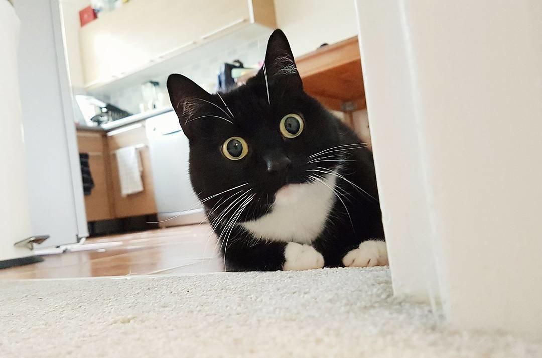 озадаченный кот картинки известно