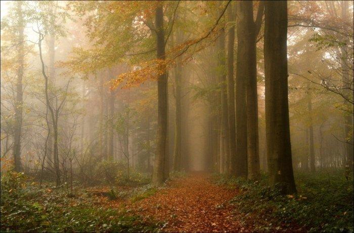 Осень дарит много Ð¿Ð°ÑÐ¼ÑƒÑ€Ð½Ñ‹Ñ Ð´Ð½ÐµÐ¹, но в Ð½Ð¸Ñ ÐµÑÑ'ÑŒ своя прелесть и гармония