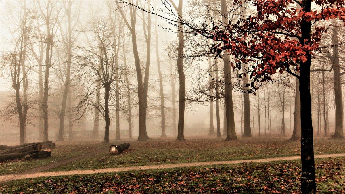Солнечный  лучик в тумане