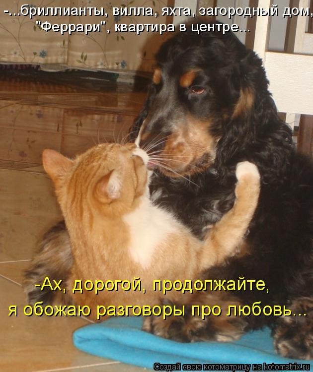 Смешные картинки с кошками и собаками с надписями