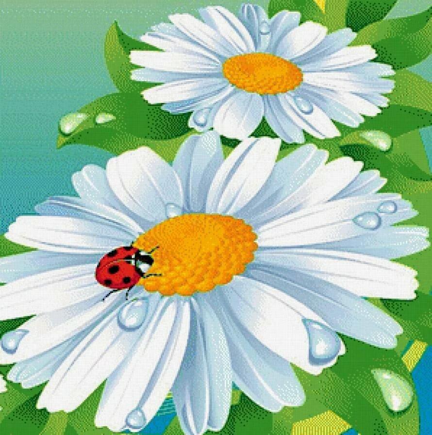 Картинка в детский сад ромашка