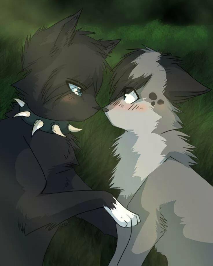 Коты воители любовь