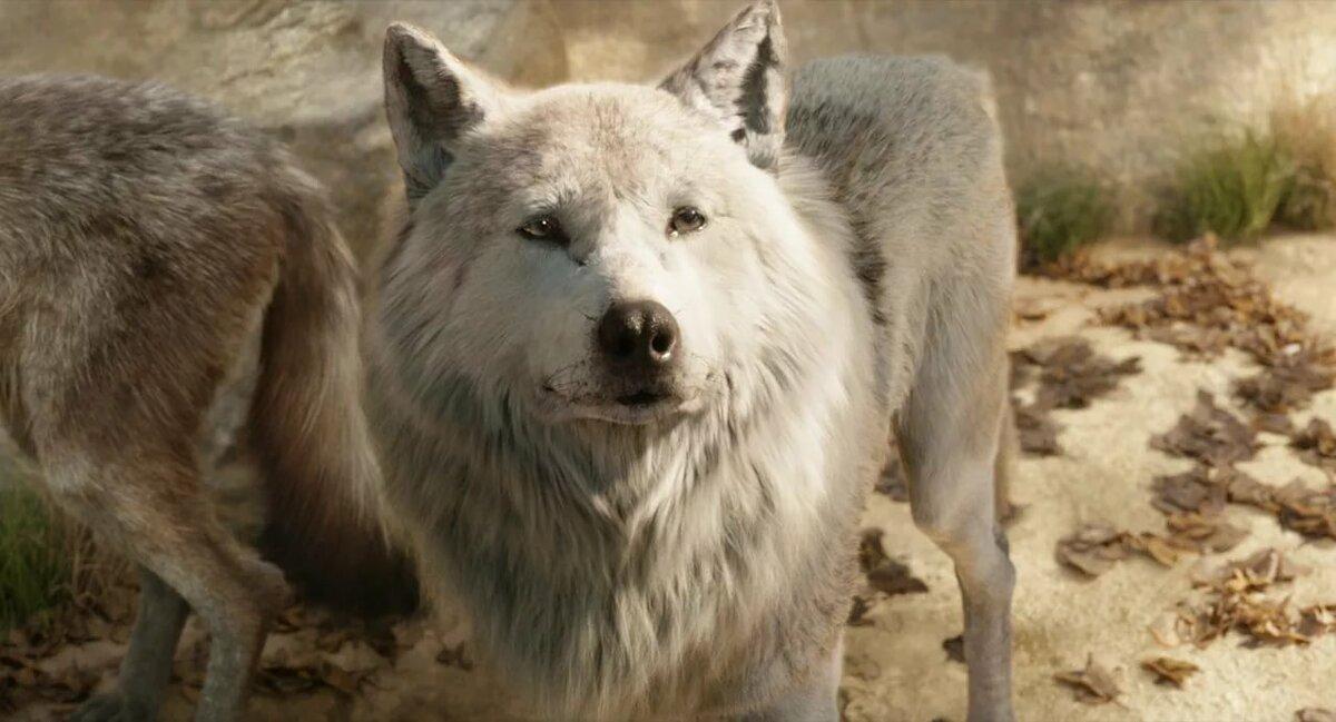 Ракша волчица картинки