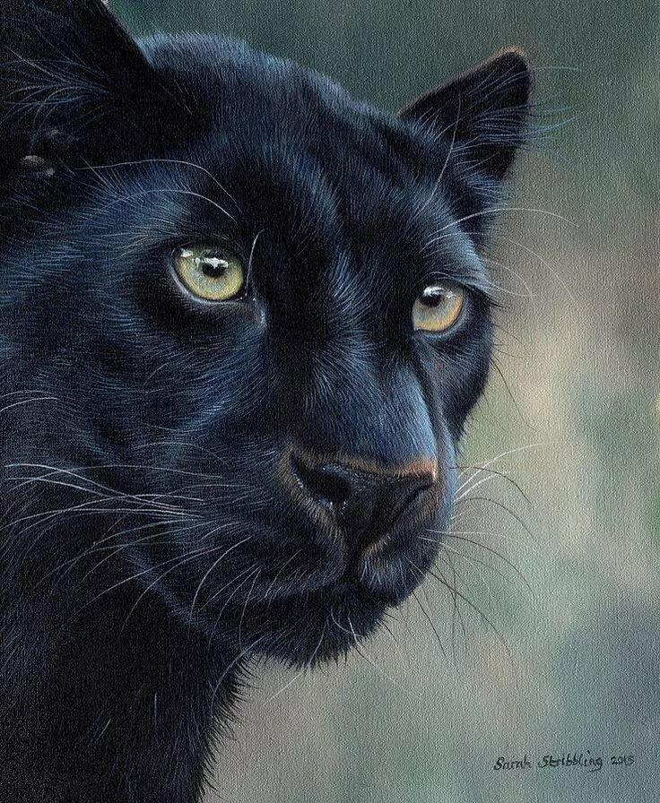 любой рисунки пантер картинки отличие