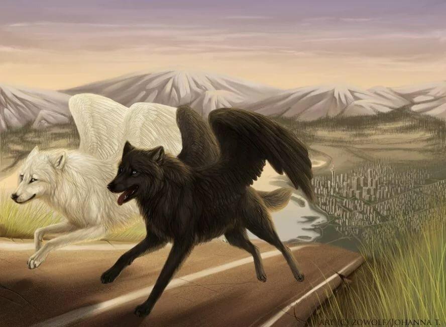 Картинка черного волка и белой волчицы ракете русский