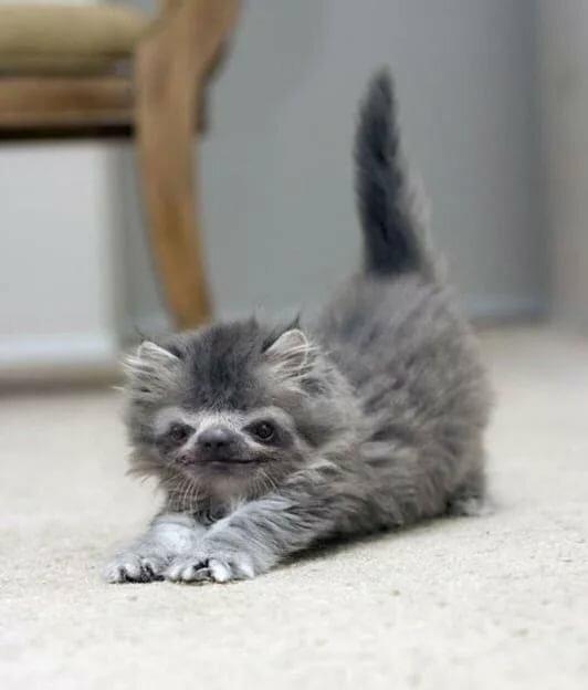 Картинки приветик котик прикольные