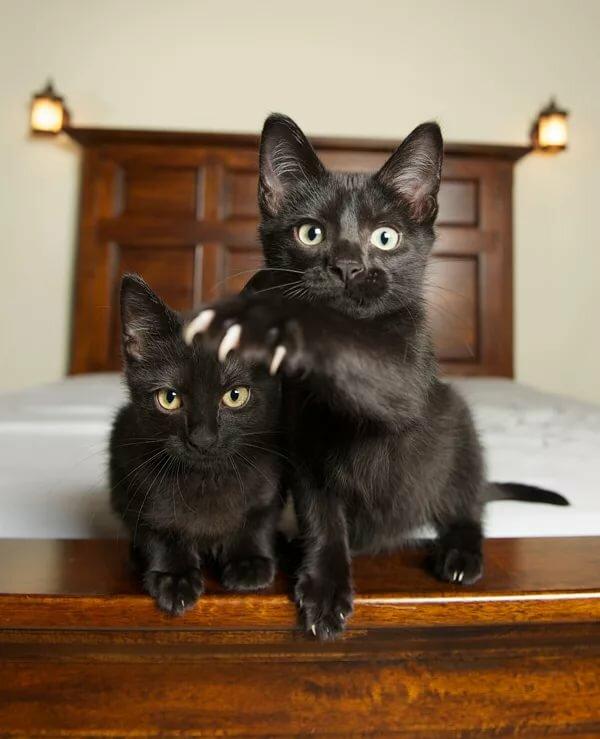 черная кошка с котенком картинки легкие, простые