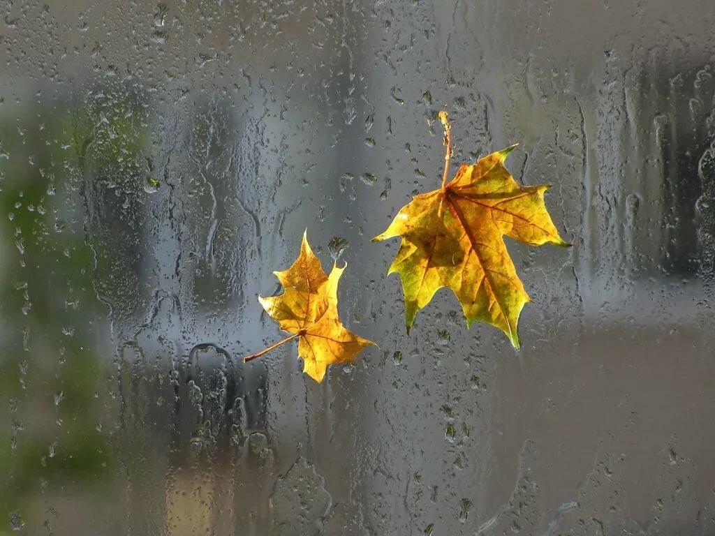 открытки дождливое утро осень уникальное