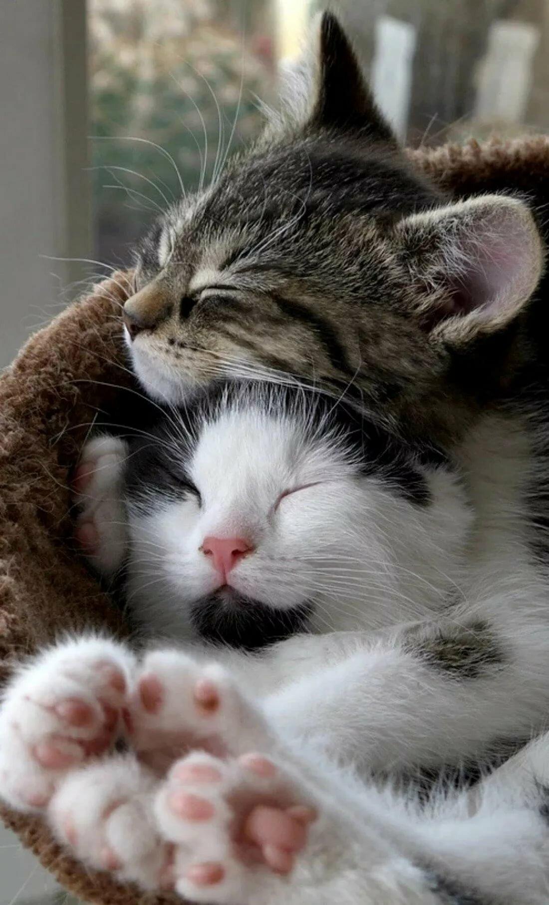 видно милые картинки обнимашек животных шаблон визитки
