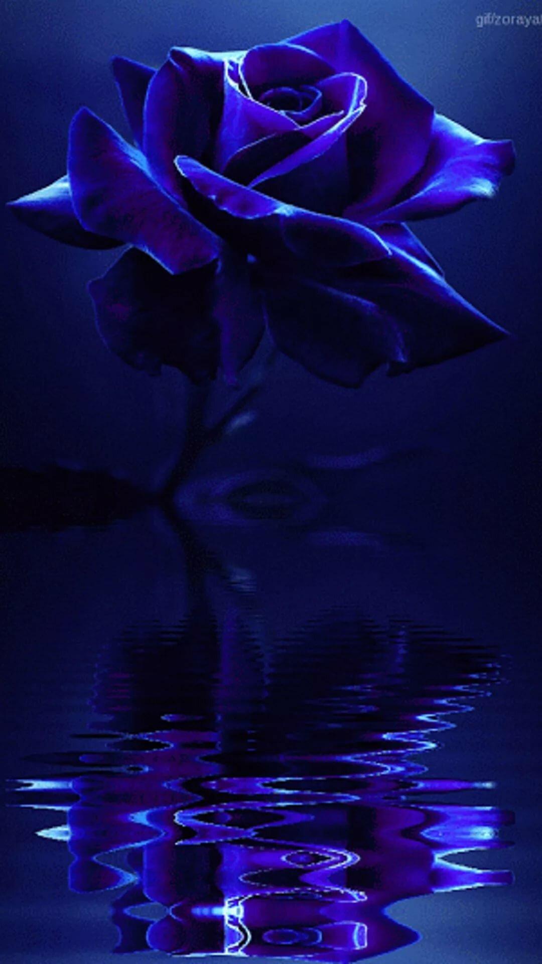 Картинки, синяя роза гифы