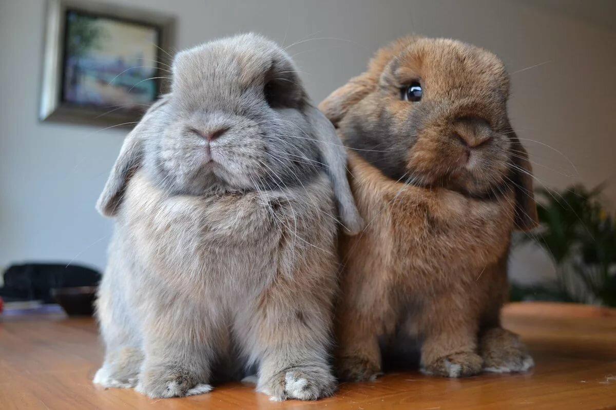 познакомилась встрече картинки приколы кролик имеет