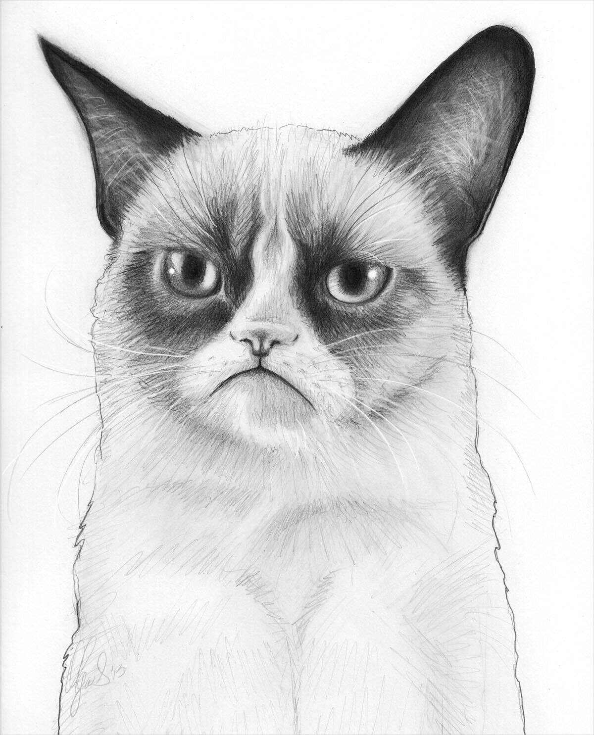 Коте нарисованые картинки