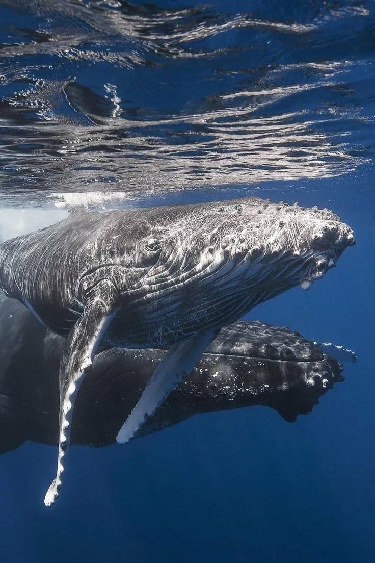самое большое животное в океане фото нужно