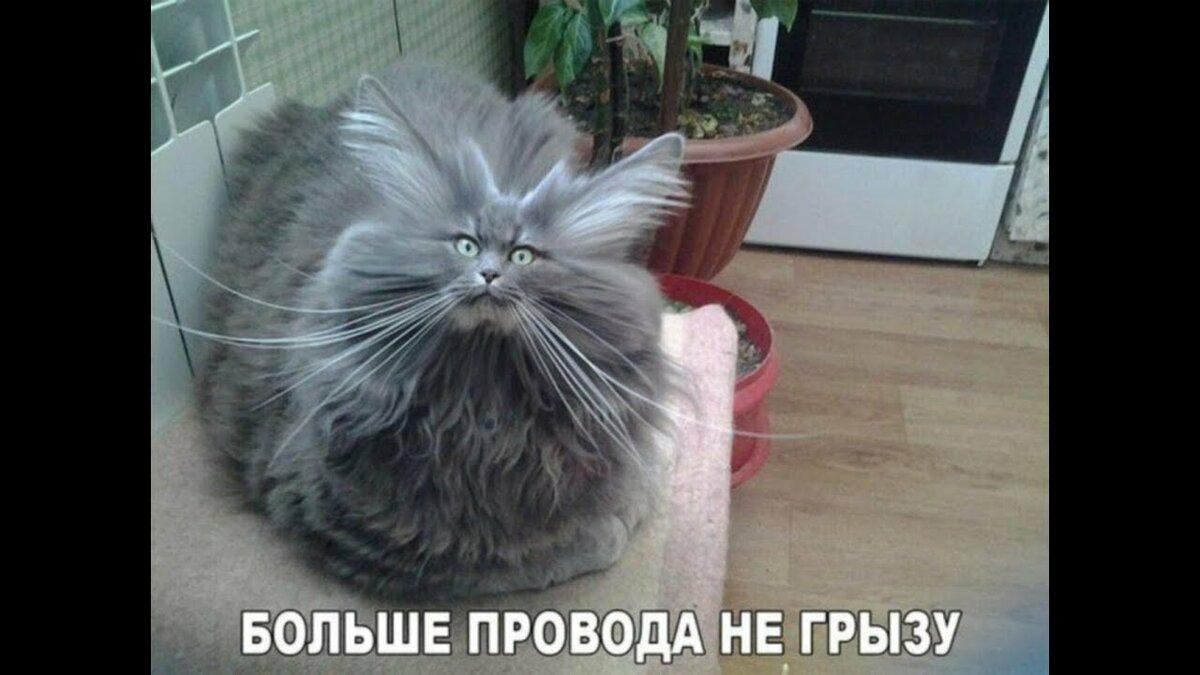 Смешные картинки котов и кошек смех до слез