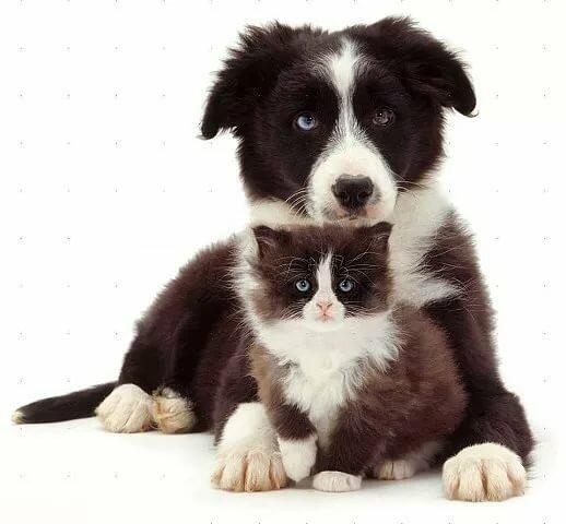 нашей породистые коты и собаки картинки дешевле