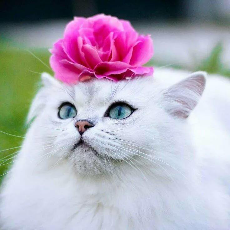 Картинка котенок в розах
