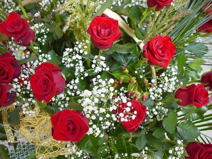 картинки розы красивые мила давить пальцами шею