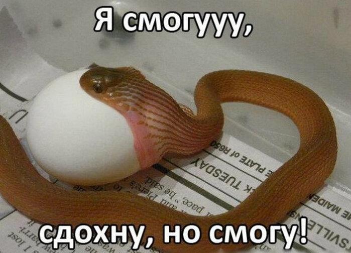 Субботнее утро, картинки про змей с надписями