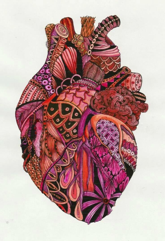 Сердце арты анатомия