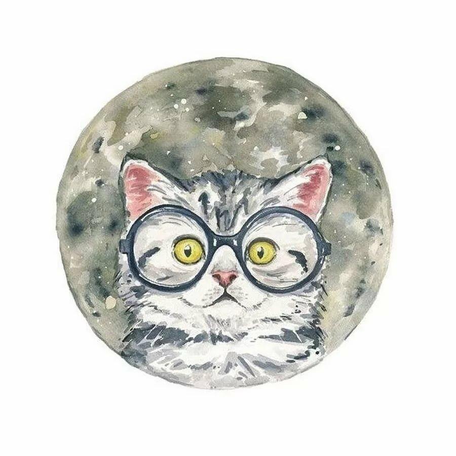 монтаж отделка картинки кошек в кругах блюда