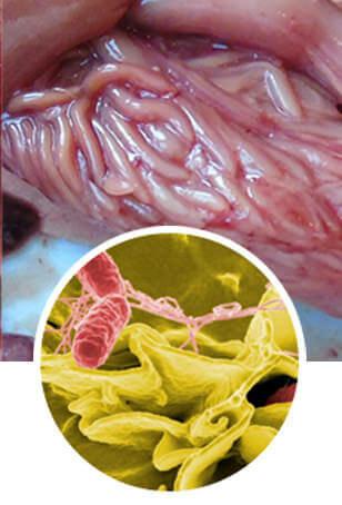 Detoxic средство от паразитов. Отзывы о средстве  от паразитов - мнение врачей  Подробнее по ссылке... 🔔 http://bit.ly/31HKpt2      Она мне посоветовала средство, которое называется . Препарат «Детокс» можно отнести к группе особо эффективных натуральных комплексов, которые направлены на борьбу с различными паразитами, диагностируемыми в организме человека. Он обладает ценными очищающими свойствами от токсинов и различных насекомых, которые находятся в организме человека. Сильное средство против паразитов урогенитальной системы. Препарат  от паразитов — инструкция по применению Лекарство от паразитов купить в аптеке, цена От Паразитов: Отзывы, Цена, Состав И Стоит Ли Покупать Что значит Детокс на сленге? Как понять слово Детокс? Смысл Препараты для удаления бородавок и папиллом