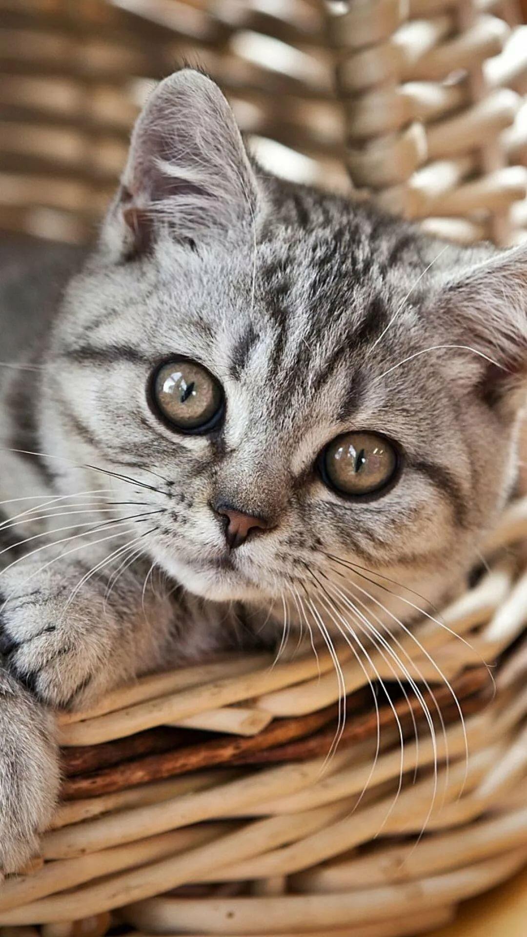 картинки кошек на телефоны маникюр коротких ногтях