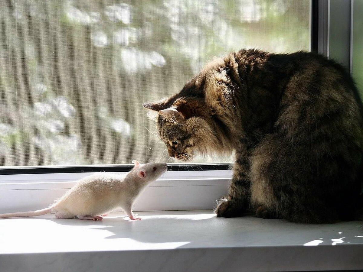 Смешные картинки про кота и мышь, про животных