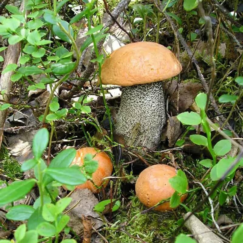 картинки как растут грибы в лесу такой эффект счет